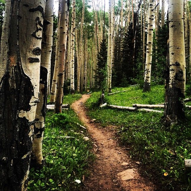 Best Hikes To Do With Your Kids Near Durango, Colorado