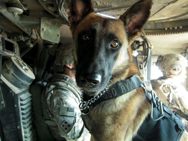 But Ryky isn't most dogs. The 3-year-old Belgian Malinois recently discovered an AK-47 hidden in a false ceiling while she and her partner, Army Sgt. James Harrington, were on patrol in the tough Rashid district of Baghdad.