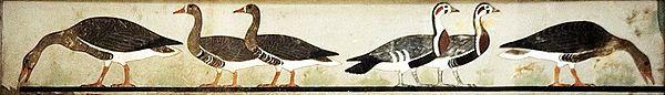 Las Ocas de Meidum, tumba de Nefer-Maat y Atet, Meidum. Reino Antiguo, IV Dinastía. El Cairo, Museo Egipcio. Durante la din.IV serán muy habituales en pintura las representaciones de ofrendas y de la vida campestre como en este caso. Aparecen 6 aves en medio de un campo dispuestas en dos parejas erguidas en el centro y 1 en cada esquina con el cuello inclinado hacia el suelo. Estos animales formaban parte de una escena más compleja donde los hijos de Atet tiraban de una red con aves…