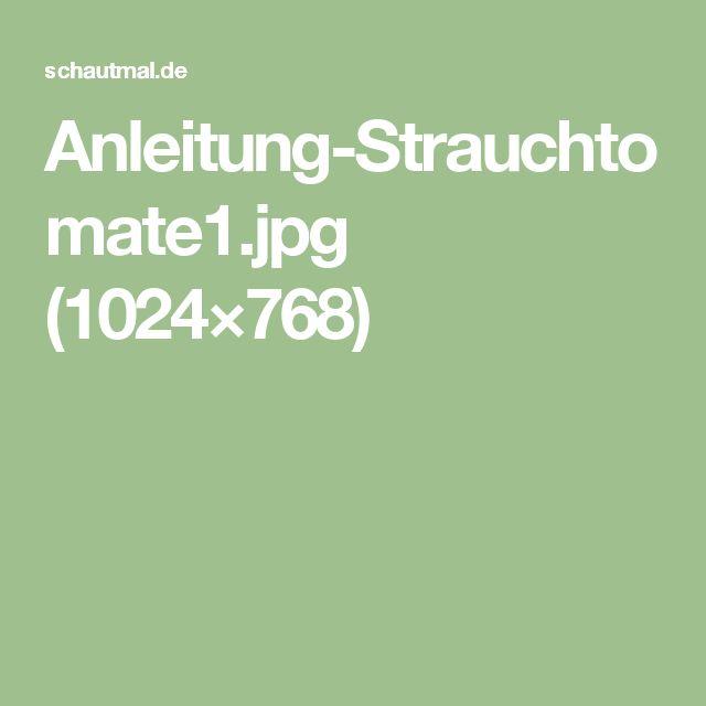 Anleitung-Strauchtomate1.jpg (1024×768)