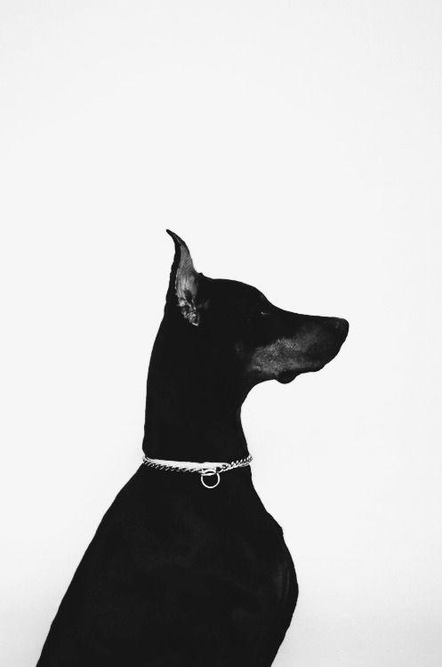 azennevem:  be fashionable | via Tumblr itt: We Heart It.