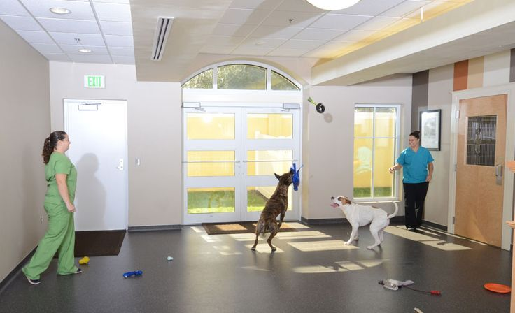 Indoor with small amount of outdoor fenced in Clinic