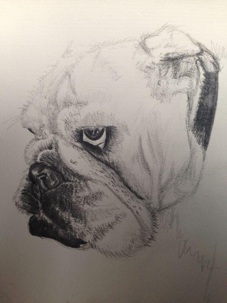 Poppy Bulldog Sketch - Pencil