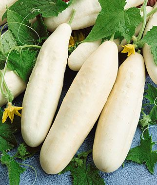 Cucumber, 'White Wonder' (Burpee).  This is the only cucumber that I really wanted to get, but the seeds were out of stock when I did my previous order.  Grew them in 2011--great in every way! - These sound interesting