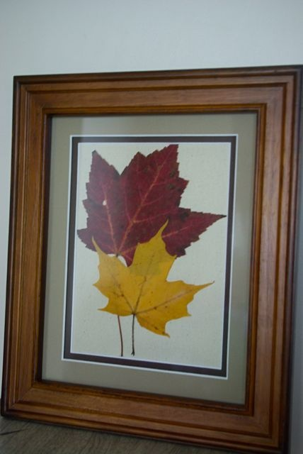 Canoe Corner Framing Pressed Leaves  Gift Ideas  Pressed leaves Leaf crafts Pressed flower art
