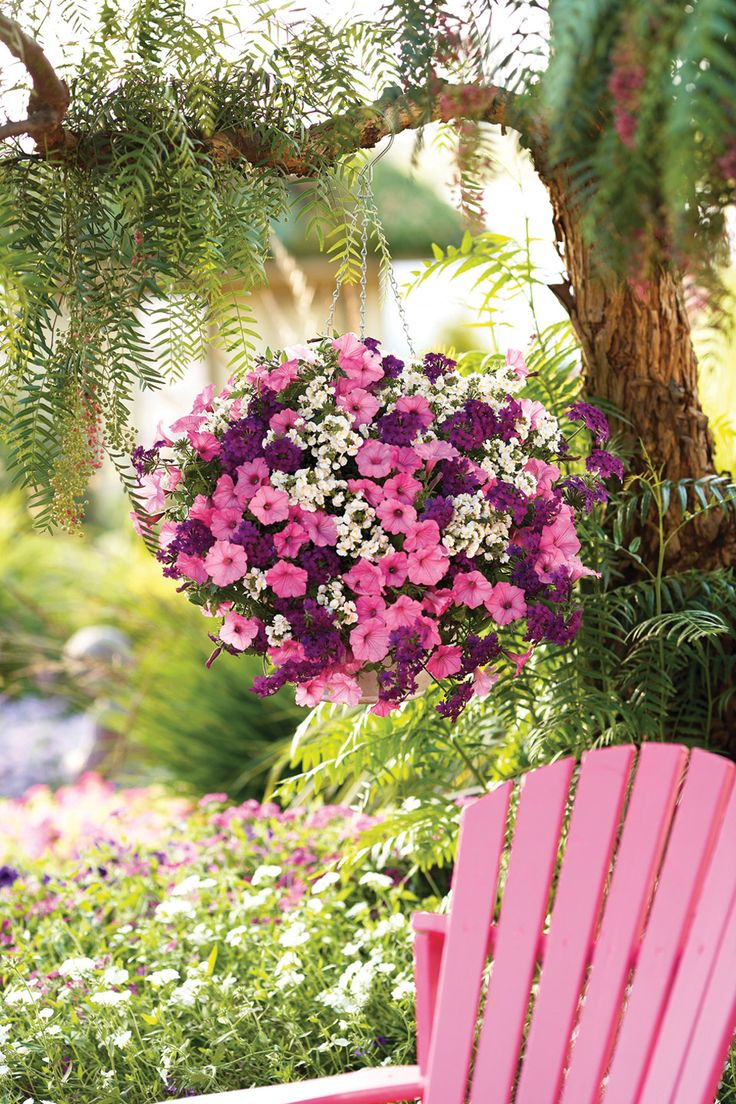 17 best ideas about hanging flower baskets on pinterest. Black Bedroom Furniture Sets. Home Design Ideas