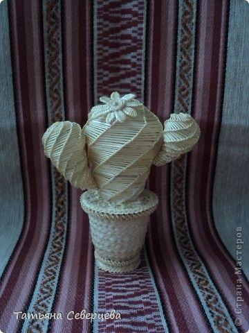 Поделка изделие Плетение Кактус Соломка