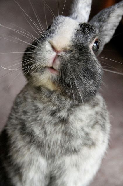 """A Bunny Rabbit: """"I'm soft to the touch and I love you so much; would you have a carrot or two?  I'll be indebted to you..."""""""