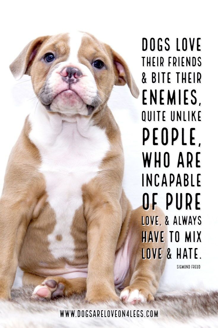 Dog Quote Dogs Love Their Friends Bite Their Enemies Dog