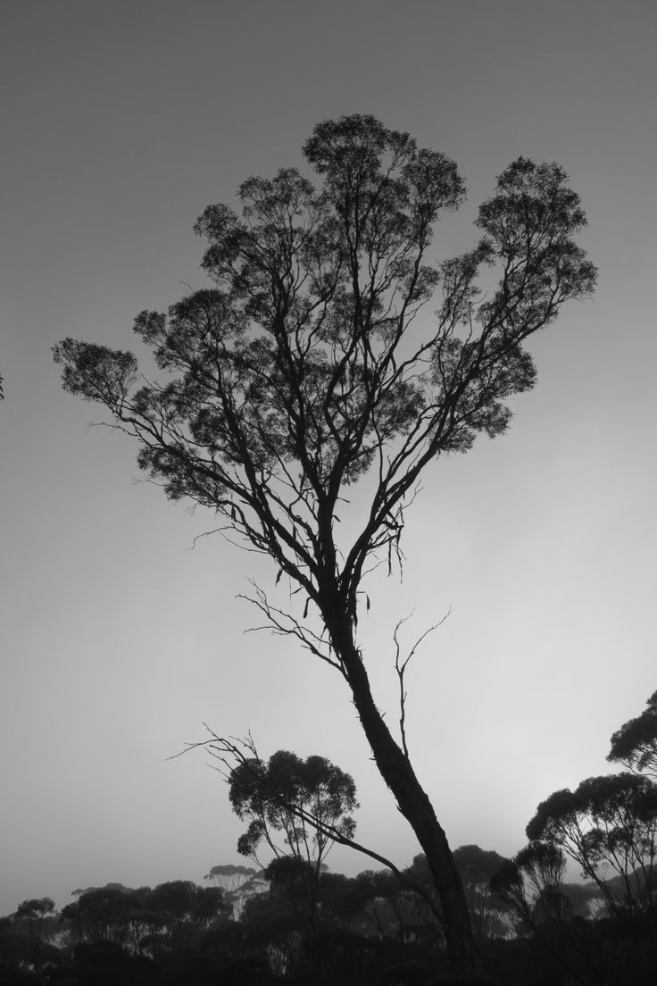"""""""All things in the landscape were left by the Creation Ancestors."""" -Noongar Elder"""