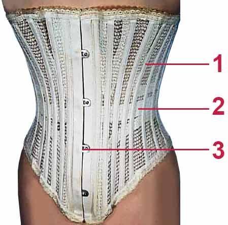 Схема расположения элементов женского корсета | krugzdorovia.com.ua