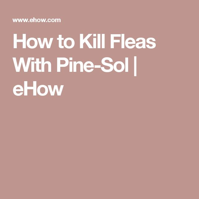 How to Kill Fleas With Pine-Sol   eHow