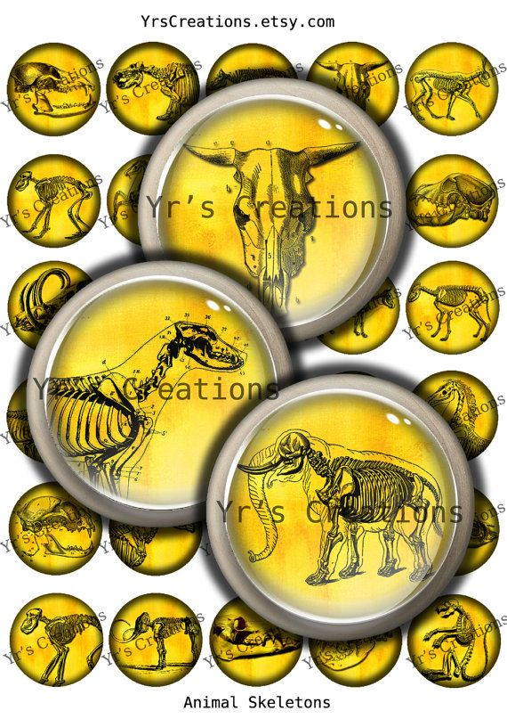 Animal Skeletons and Skulls - Digital Printable Collage Sheet- 1.5 inch circles - Anatomy Illustrations for pendants,magnets,stickers...