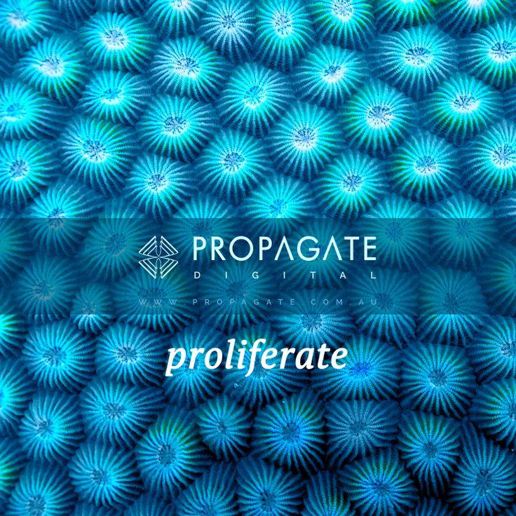Propagate - Coral - Proliferate