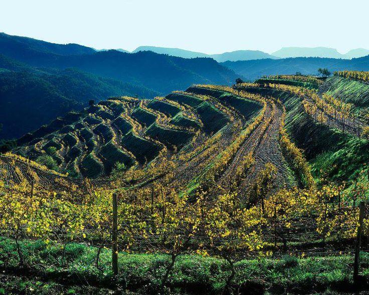 La Catalunya ha avviato la campagna della candidatura della regione di El Priorat per l'iscrizione nelle liste del Patrimonio dell'Umanità Unesco nell'ambito della categoria Paesaggio agricolo della montagna mediterranea. La regione di El Priorat è conosciuta per la qualità del vino che viene prodotto dai suoi vigneti. El Priorat è, pertanto, un paesaggio agricolo vivo e dinamico, alimentato dalla tradizione e dall'innovazione