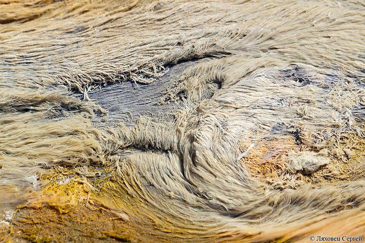 Термофильные водоросли в горячем ручье