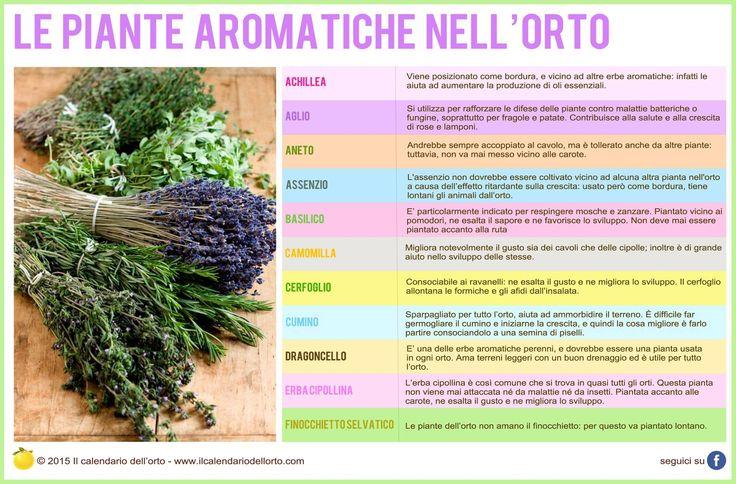 Le piante aromatiche nell'orgo