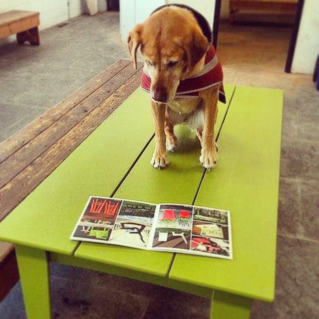 Dog On Green Modern Outdoor Picnic Table From Loll Designs. Made In The USA  From