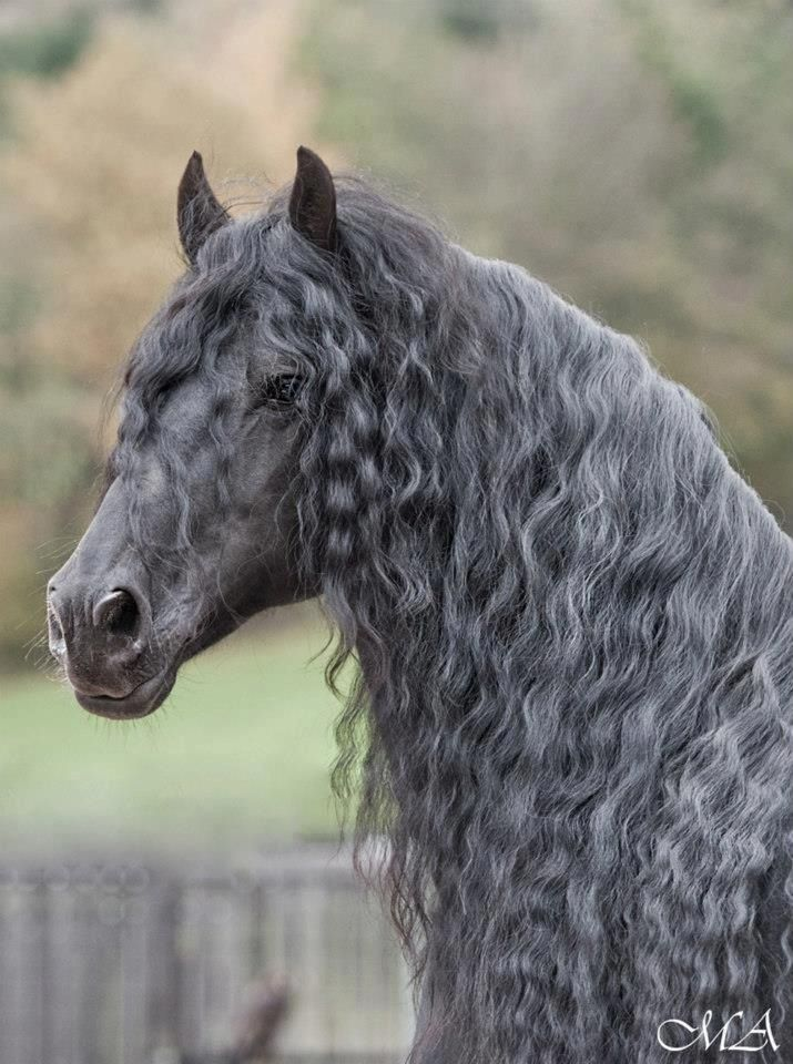 Horses Are A Magnificent Creation Of God
