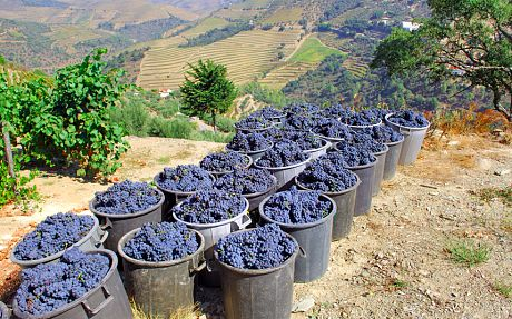 Wine holidays: readers' tips, recommendations and travel advice - Telegraph - Portugal  A region typically associated with resorts and beach holidays, the Algarve is one of Europe's most interesting up-and-coming wine-producing regions.  From the Algarve, it's also very easy to reach the Alentejo, or farther afield the Dão, Bairrada or Douro wine regions.