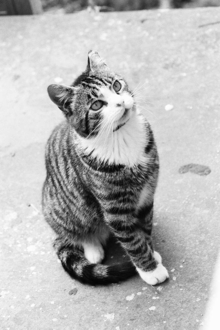 1000 Images About Cats Photos Black And White On