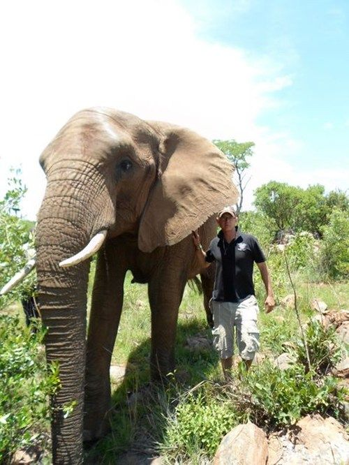 19 best images about South African Wildlife Volunteering