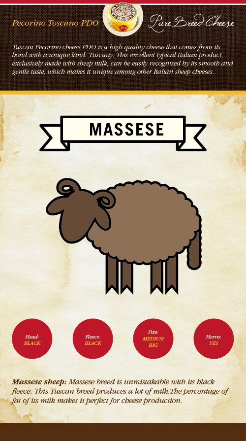 Massese sheep: Massese breed is unmistakable with its black fleece. This Tuscan breed produces a lot of milk.The percentage of fat of its milk makes it perfect for cheese production.