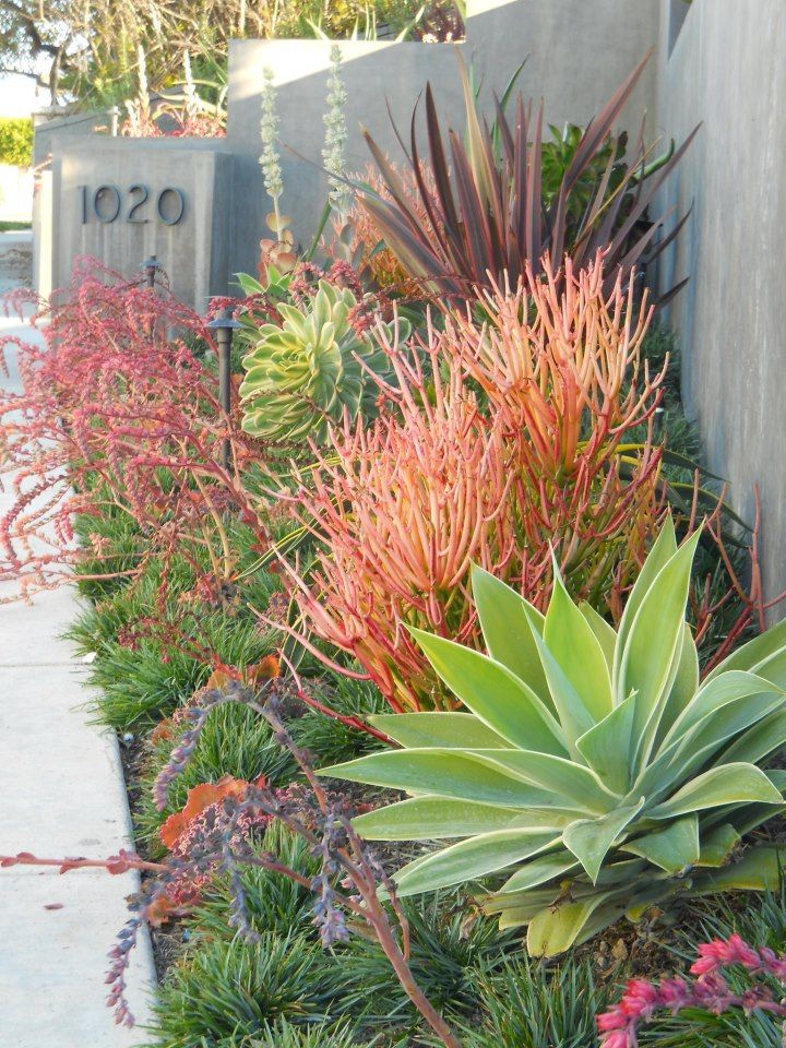 430 best images about drought tolerant gardens on for Low maintenance drought resistant landscaping