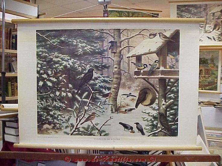 Schoolplaten Natuur - Vogels in de winter