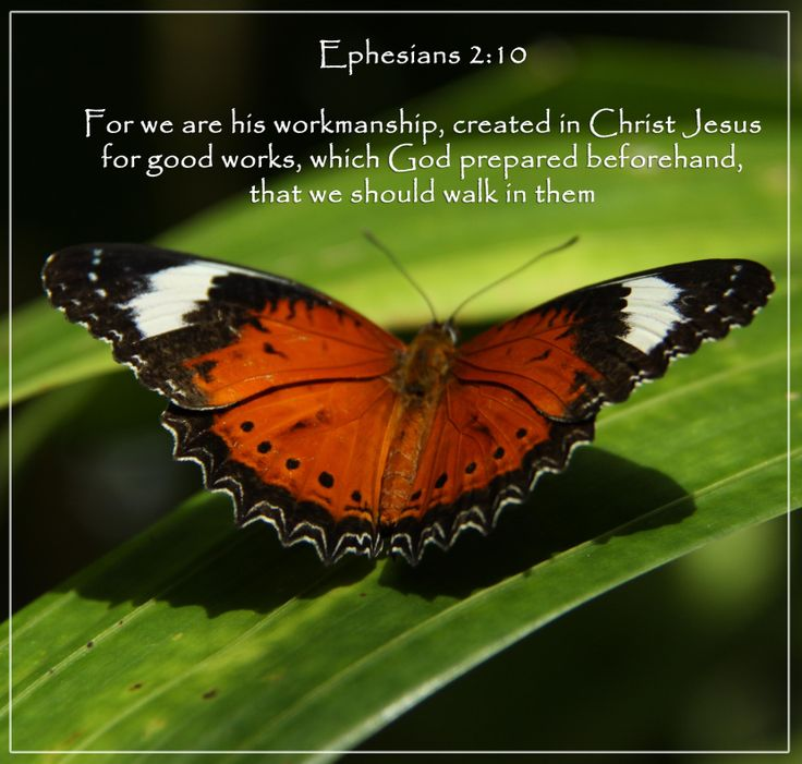 Monarch butterfly. Ephesians 2:10