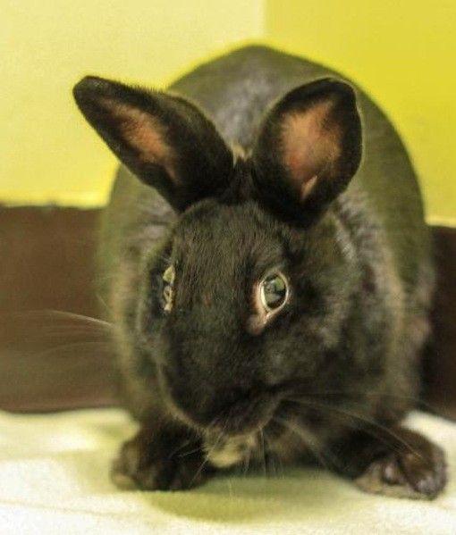 Bunny Rabbit Picture