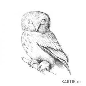 Как нарисовать сову карандашом поэтапно 40