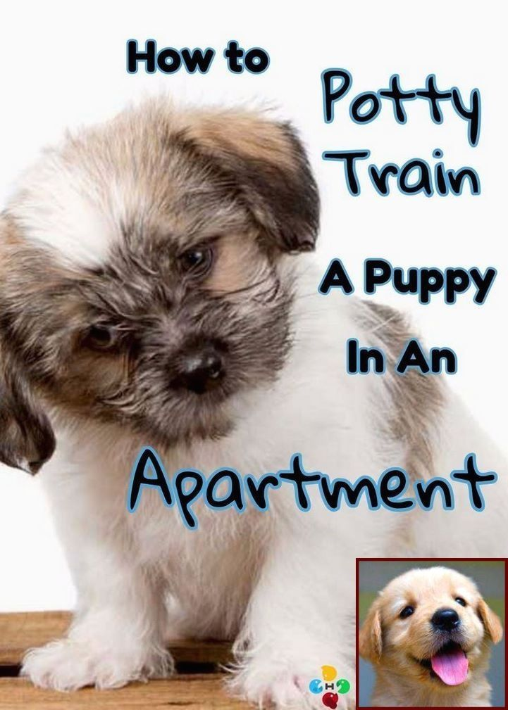 Potty Training A Dog Is Hard Dog Expert Shares 6 Easy Steps To Potty Train Your Dog In 7 Days Training Your Puppy Training Your Dog Dog Training