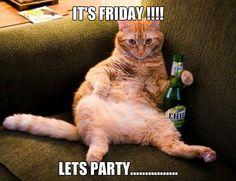TGIF! It's Friday cat!   Funny Animal Photo