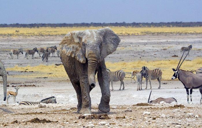 1000+ ideas about Desert Animals And Plants on Pinterest ...  1000+ ideas abo...