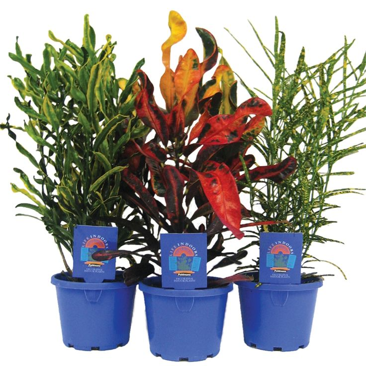 Find 103mm Assorted Life Indoor Plant Range at Bunnings Warehouse. Visit your local store for the widest range of garden products.
