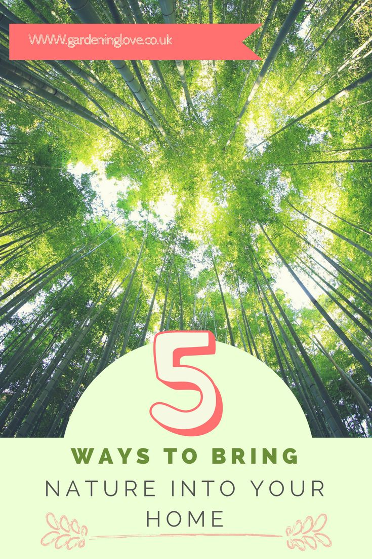 Bringing nature into your home carries many health benefits for your mind and overall wellbeing. Here are 5 ways to bring nature into your home, helping you get some indoor ecotherapy. Nature | wellbeing | ecotherapy | home | lifestyle | home decor |