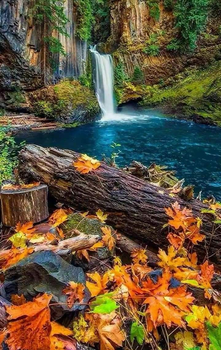 This is my dream yard. I can't wait to live in the New World with this right outside my house. Falling asleep and waking up each day to the soothing sound of the waterfall.
