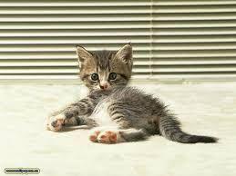 Výsledok vyhľadávania obrázkov pre dopyt mačky