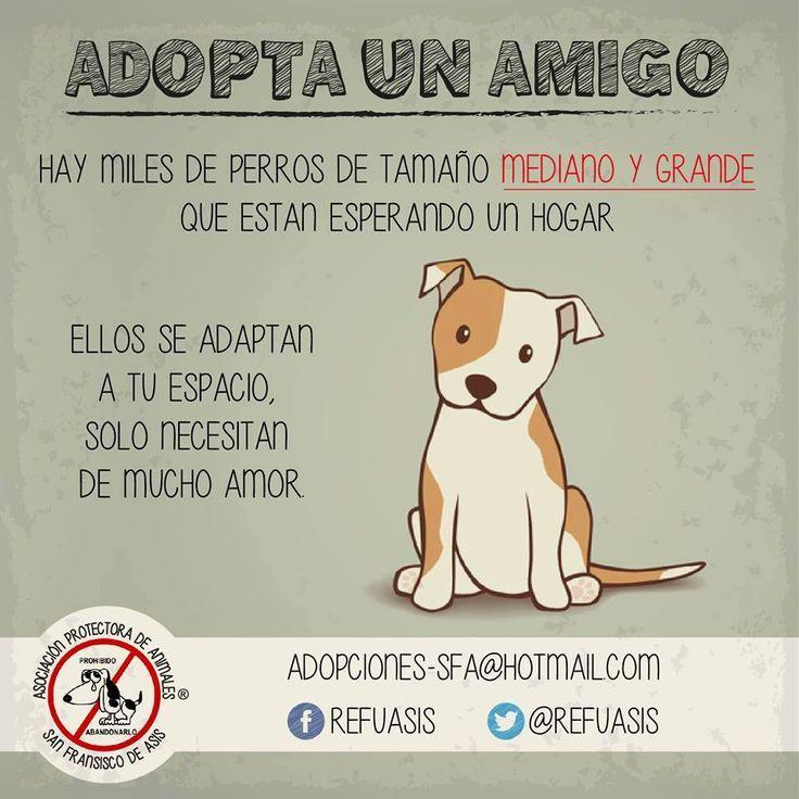Cuando el tamaño del perritos es directamente proporcional al amor que te ofrecen. https://www.facebook.com/Refuasis #adopcion #perros