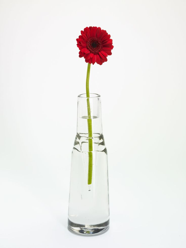 17 Best Images About Single Flower In Vase On Pinterest