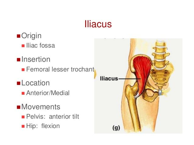 77 best muscle origins and insertions images on pinterest muscle iliacus origin and insertion google search ccuart
