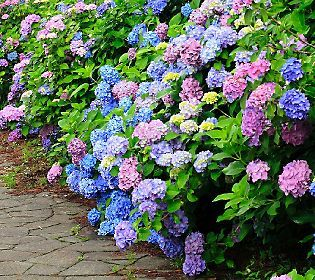 Cottage Farms 3 Piece La Dreamin Hydrangea Collection Qvc Pinterest Garden And Flowers