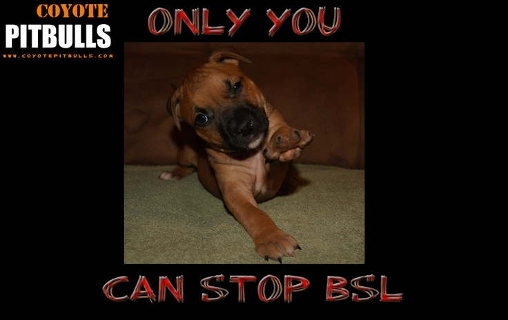 Stop Breed-Specific Legislation (BSL)!  Currently, 75 breeds of dog (and growing) are on the BSL list! This doesn't just affect pitbull owners...your dog could be next to be banned, euthanized, taken from you. Stop this profiling of dogs! Dogs should be dealt with on a case-by-case basis...not by trying to annihilate an entire breed. Hold owners responsible for the actions of their animals, not dogs! VOTE NO!! on BSL!
