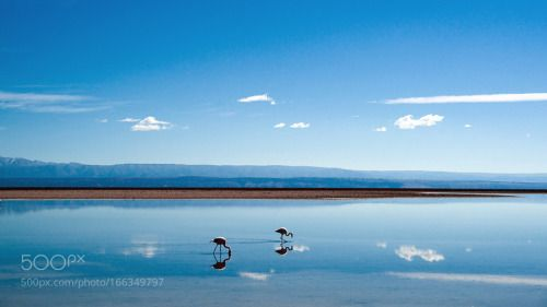 Flamingos and clouds by VitoMiribung  sky water blue clouds salt chile salar…