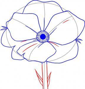How to Draw Poppy