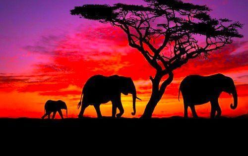 Elephants at Sunset!
