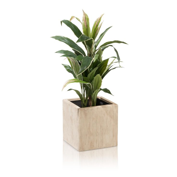 31 best Pflanzkübel Fiberglas images on Pinterest Plant troughs