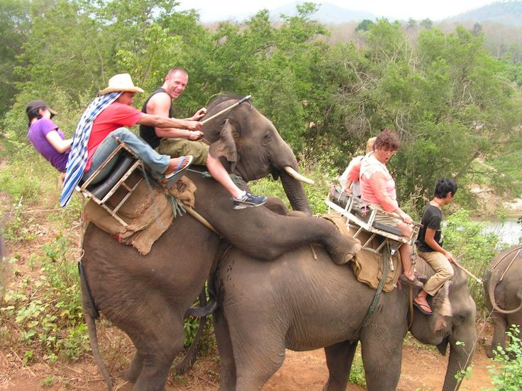 Ready to fall off this elephant !