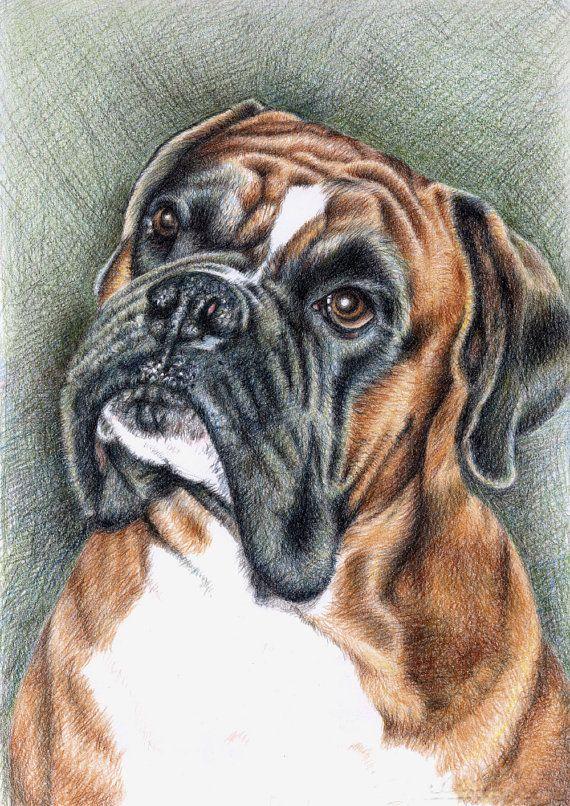 Boxer Portrait  Kunstdruck A3 von ArtsandDogs auf Etsy, €19.00